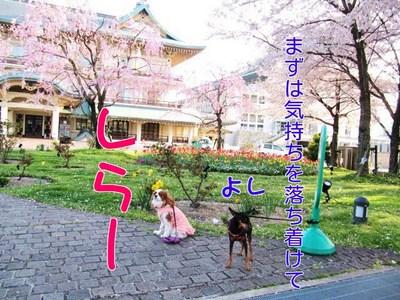 zi3muonzOQkRXU91365594921_1365595156.jpg